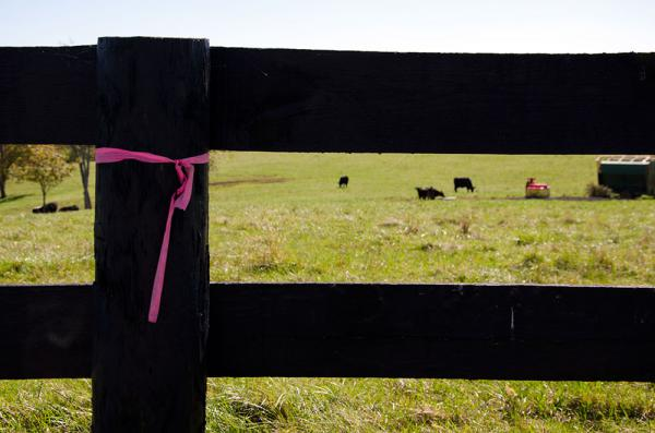 Pink ribbons mark the pipeline path