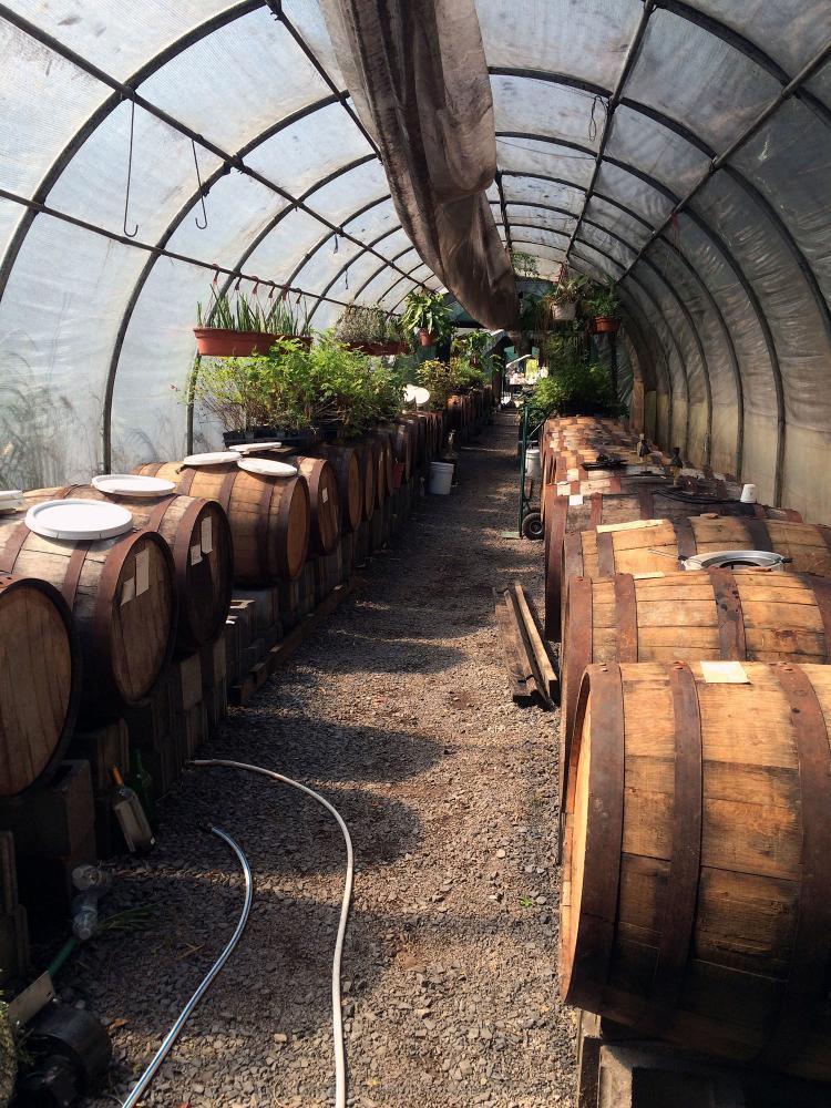 Shields winery