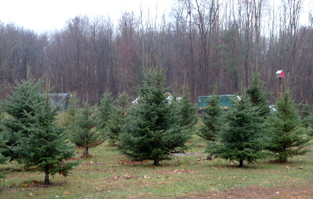 taylor swift christmas trees and pa publicsource news for a better pittsburghpublicsource news for a better pittsburgh - Christmas Tree Farm Colorado