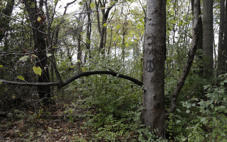 A peace sign is painted on a tree in Hays Woods. (Photo by Ryan Loew/PublicSource)