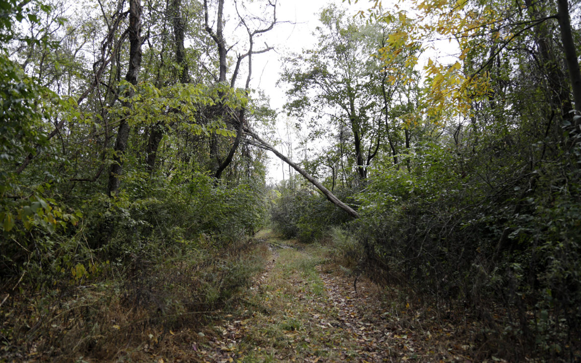 A path leads through a section of Hays Woods. (Photo by Ryan Loew/PublicSource)