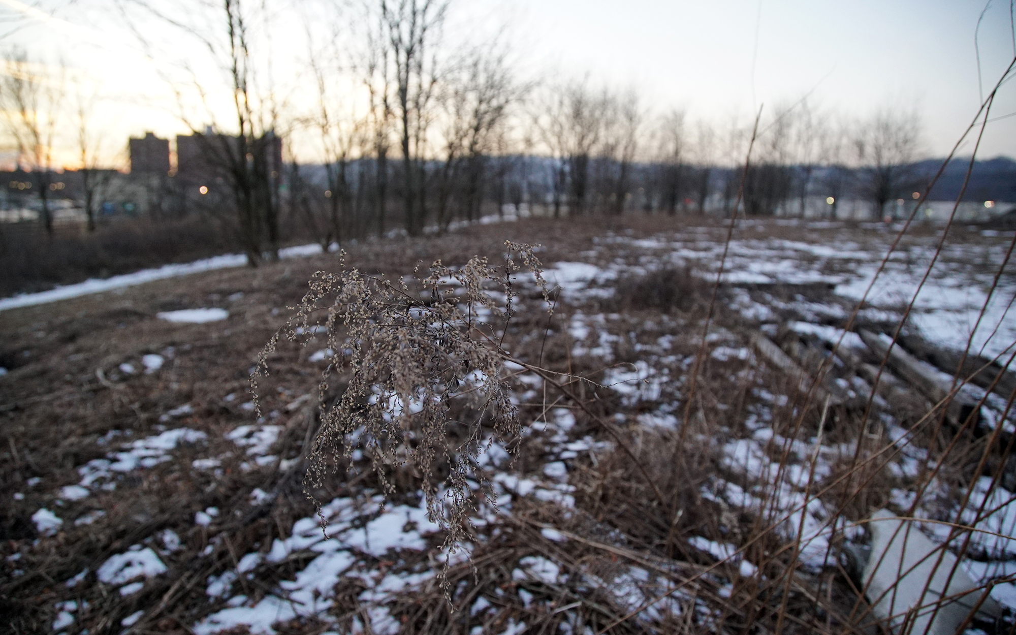 A section of undeveloped land sits near the bustling shopping area of the Waterfront. (Photo by Ryan Loew/PublicSource)