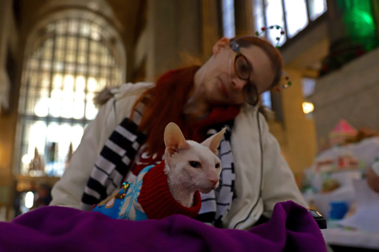 Author Melissa Haas and Catula, a mostly hairless Cornish Rex cat, visit the display of gingerbread houses at Pittsburgh's City-County Building on Dec. 20, 2019. (Photo by Jay Manning/PublicSource)