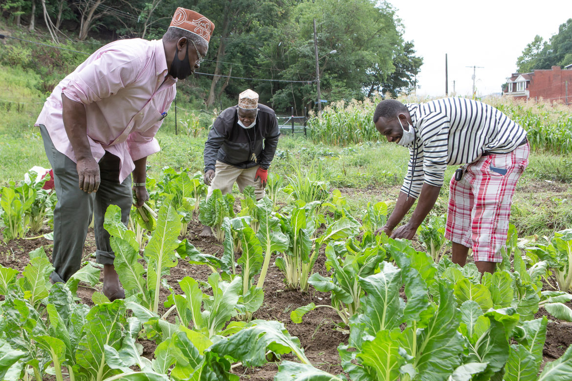 (Left to Right) Hassan Malambo, president of the Community Garden President, Ula Muya, Mwanakuche site planer and Abdulkadir Chirambo, president of the United Somali Bantu of Greater Pittsburgh, inspect collard greens at the Mwanakuche Community Farm. (Photo by Brian Cook)