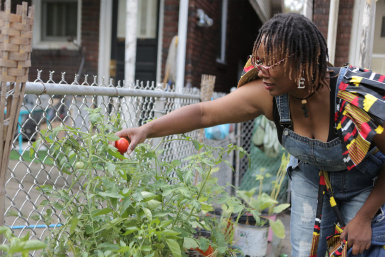 Ebony Lunsford-Evans, owner of FarmerGirlEB, picks tomatoes at her home garden. (Photo by Brian Cook)